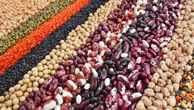 hemmati-beans